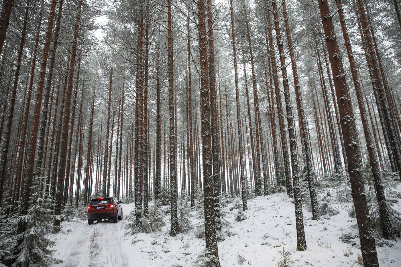 <p>Range Rover Sport makes its way through a snowy wood in Finland.</p>